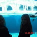 фотографии 2012 300