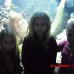 фотографии 2012 309