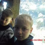 фотографии 2012 323