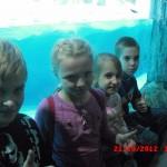 фотографии 2012 341
