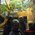 фотографии 2012 425