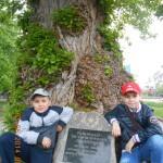 дерево,которое пережило войну